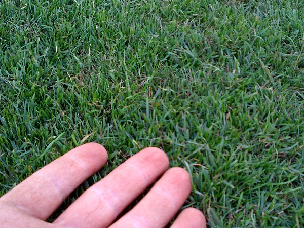 Cheap Turf prices for quality turf