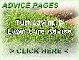 Turf Lawns garden Advice
